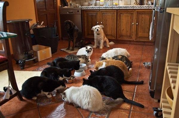 evde hayvan beslemek